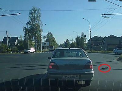 ВИДЕО: Водители остановились, чтобы пропустить утиное семейство