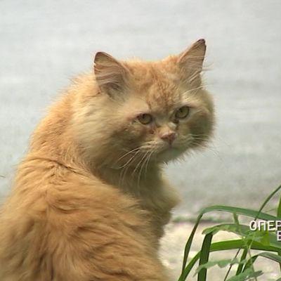 В центре Ярославля развернулась операция по спасению одинокого кота из квартиры
