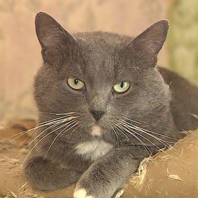 Хозяйка умерла, наследников нет: в Ярославле 13 котиков ищут добрые руки