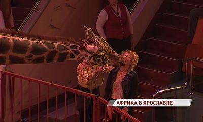 В ярославском цирке теперь можно поцеловаться с жирафом: чем еще порадует новая программа