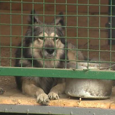 В ярославском питомнике прошла традиционная раздача бездомных собак