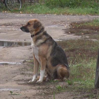 Верит, что скоро вернется: в Тутаеве собака полгода ждет умершего хозяина