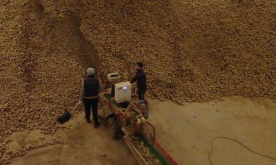 В регионе завершился сбор урожая: как будут хранить картофель, чтобы он оставался вкусным
