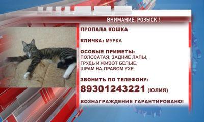 В Ярославле хозяева разыскивают свою кошку-путешественницу