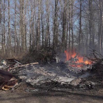 В Ростовском районе и Переславле могут запретить посещать леса