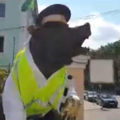 В Ярославле появился медведь - сотрудник ГИБДД
