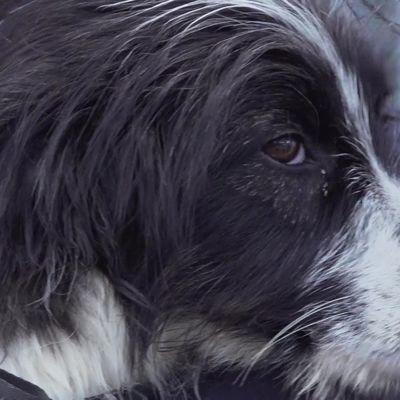 В приюте САХ рассказали, как живут бездомные собаки