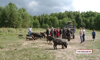 Эко-туризм: под Ростовом к открытию готовится комплекс «Макаров хутор»