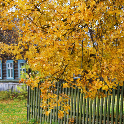 Теплый и сухой: синоптики рассказали, что ждать от октября
