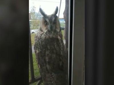 Балкон ярославца посетила сова