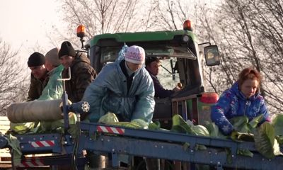 Ярославские сельхозпредприятия представили агротехнологии будущего