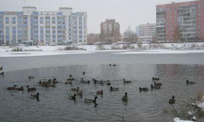 Резкий скачок температур: в Ярославской области за два дня потеплеет сразу на 40 градусов