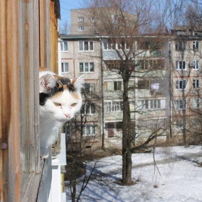 Весна или оттепель: синоптики рассказали о погоде на начало марта