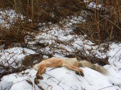 Страшная находка: в промзоне Рыбинска обнаружили мертвых животных