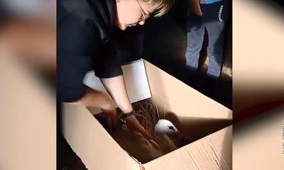 Рыбинский аист сбежал из московской ветеринарной клиники