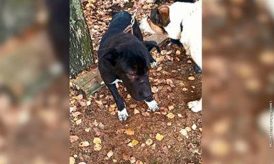 В Ярославле безответственные хозяева избавились от питомца, бросив щенка на улице