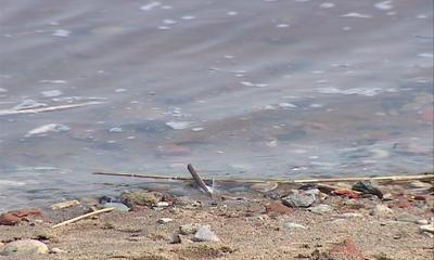 В Ярославской области проведут проверку по факту попадания нефтепродуктов в Волгу