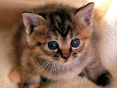 5000 рублей за убийство котенка