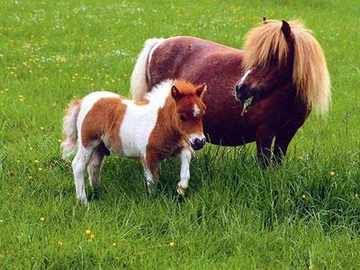 В Красноперекопском районе потерялись пони