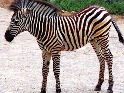 Открытие зоопарка Видео