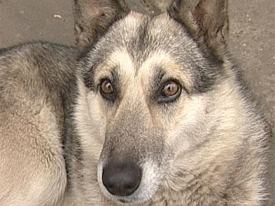 Собачья жизнь Видео