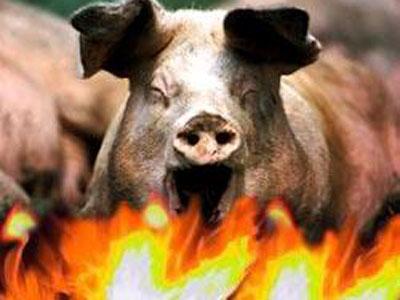 Сгорел свинарник