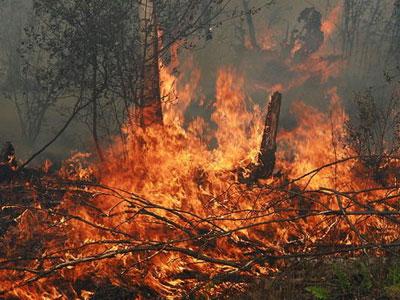 Лесных пожаров все больше