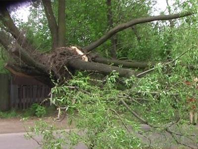 На проезжую часть упало дерево