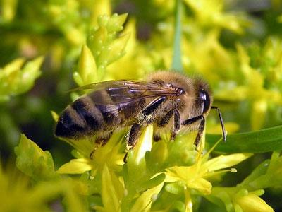 Пчелы на детской площадке