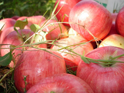 Яблочный спас на Толге