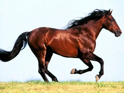Украли рыжего коня