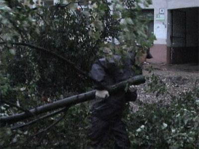 На улице Ушинского упало дерево