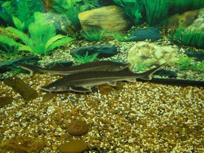 Редкая рыба