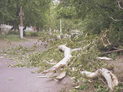 На троллейбус упало дерево