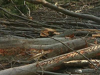 Большесельцы отстояли лес