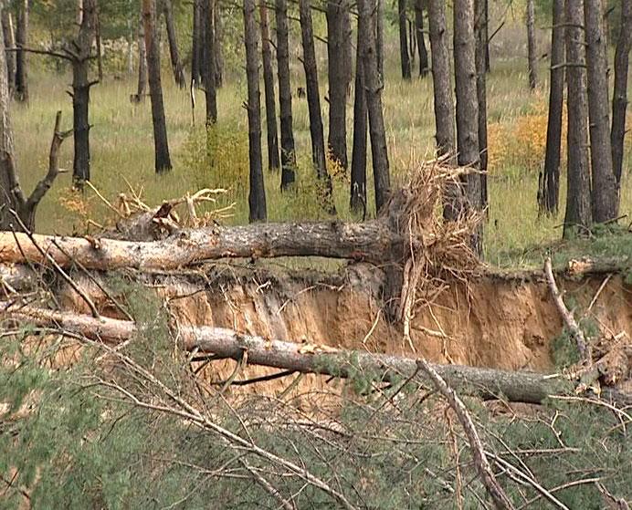 Незаконно уничтожают лес?