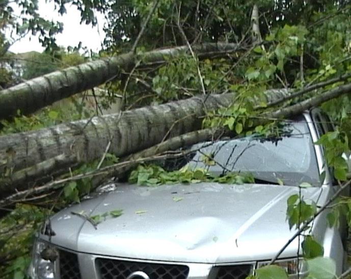 Сильный ветер повалил деревья