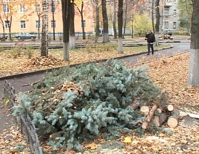 Вырубили деревья в сквере