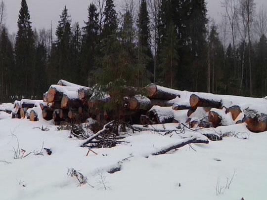Вырубили лес без разрешения