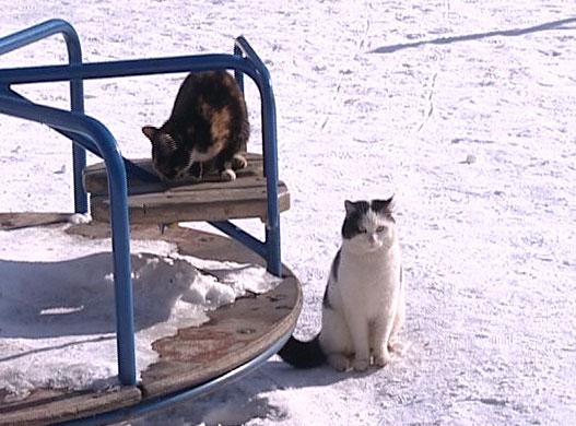 Поссорились из-за бродячих котов