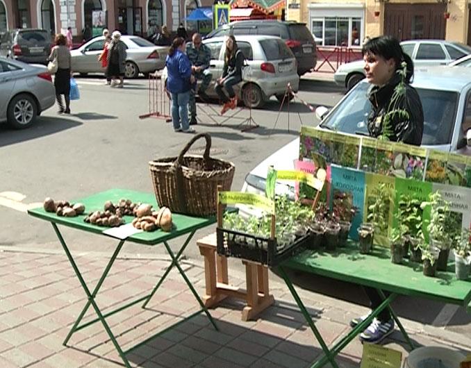 Появились первые грибы в Ярославле