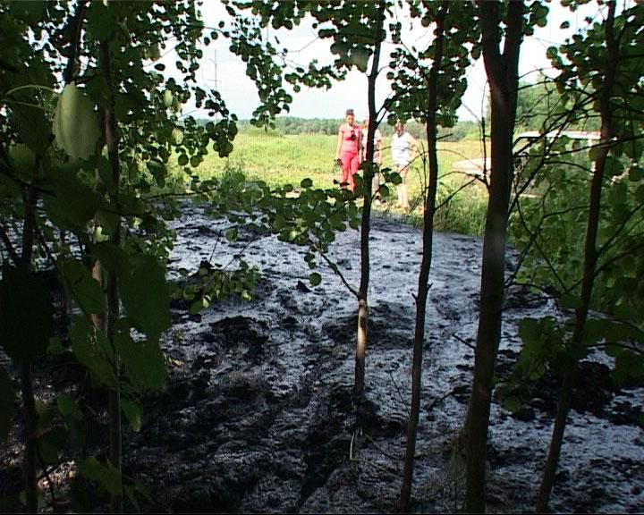 Спасли лес от загрязнения