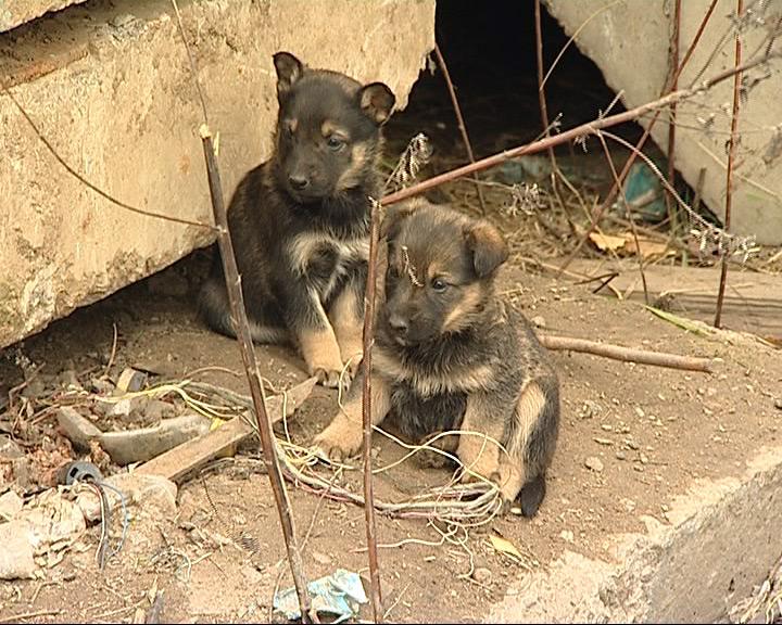 Работники одного из предприятий ухаживают за 12 щенками