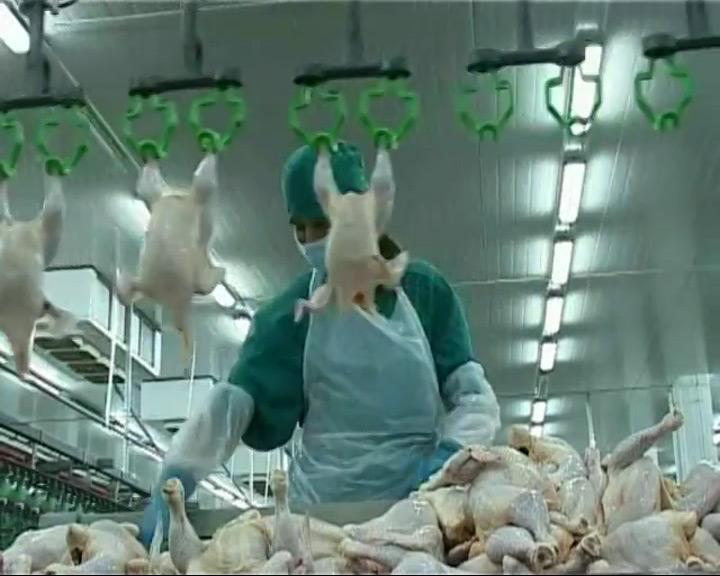 Мясо птицы из Ярославской области попало в зону риска