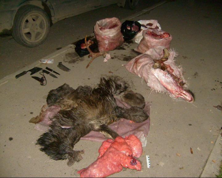 По «горячим следам» задержаны двое браконьеров