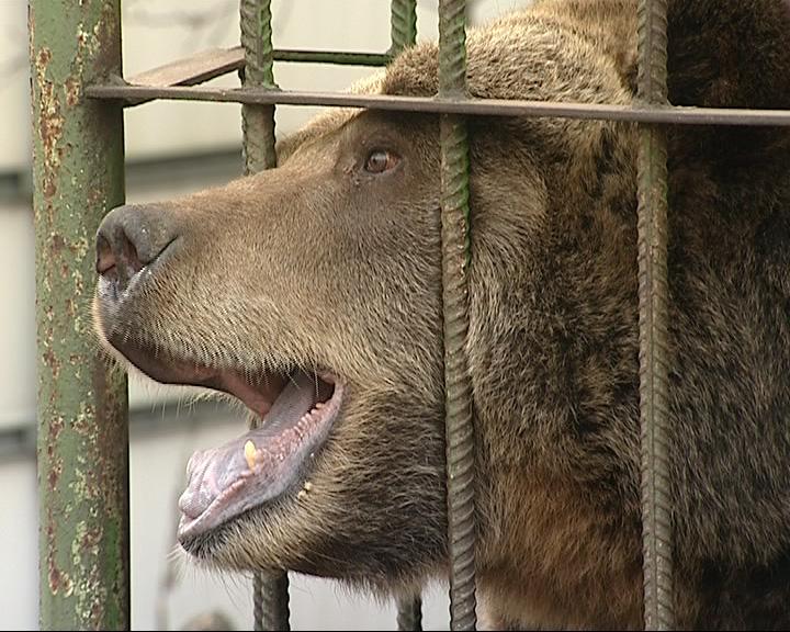 Медведица Маша готовится к зиме