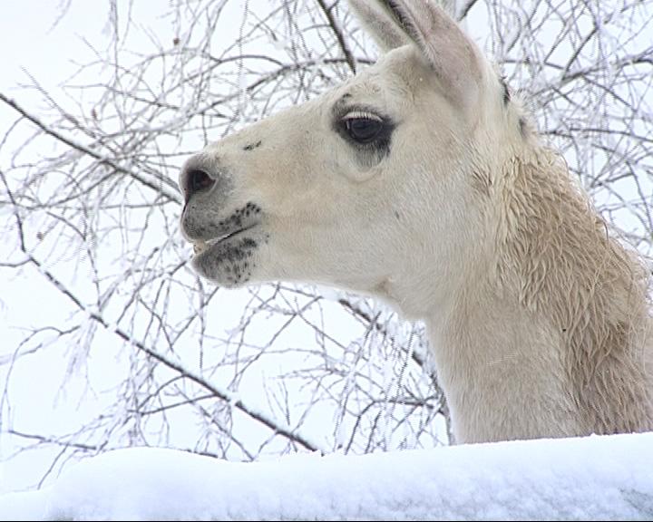 Зоопарк в снегу