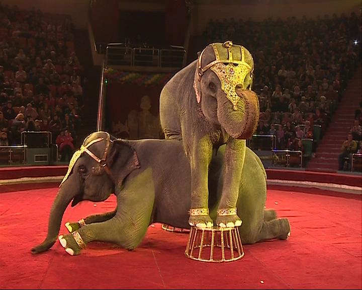 «Карнавал слонов» в Ярославском цирке