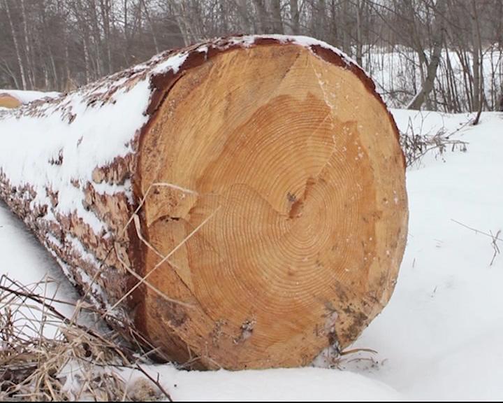 В Угличском районе недосчитались леса