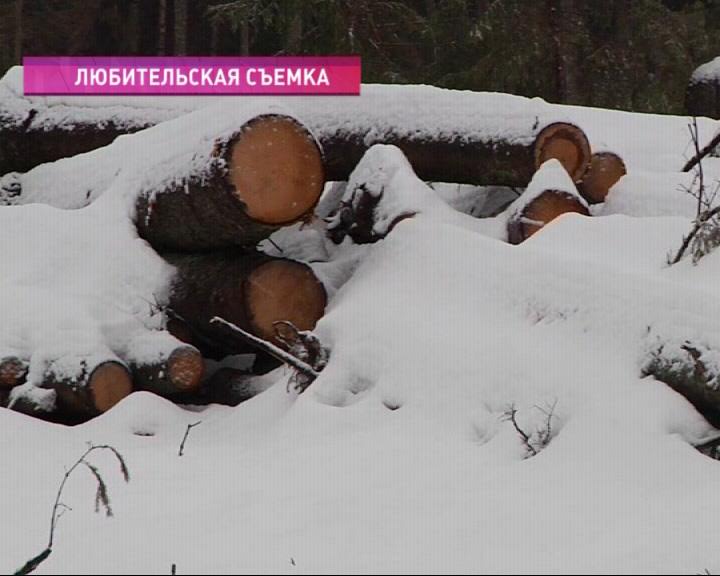 В Гаврилов-Ямском районе дерево убило лесоруба